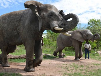 hazyview-elephant-sanctuary-1