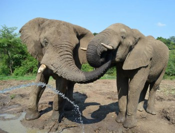hazyview-elephant-sanctuary-8