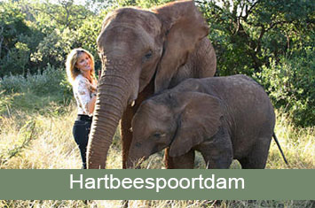 elephant sanctuary hartebeespoort icon