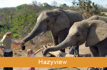 elephant sanctuary hazyview icon